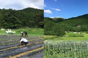 農大こそ有機農業を教えるべきではないか?